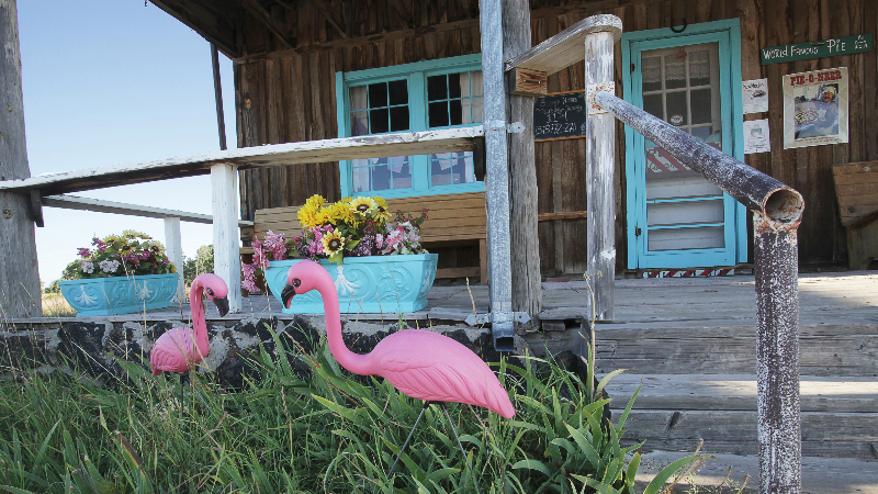 flamingos_0105